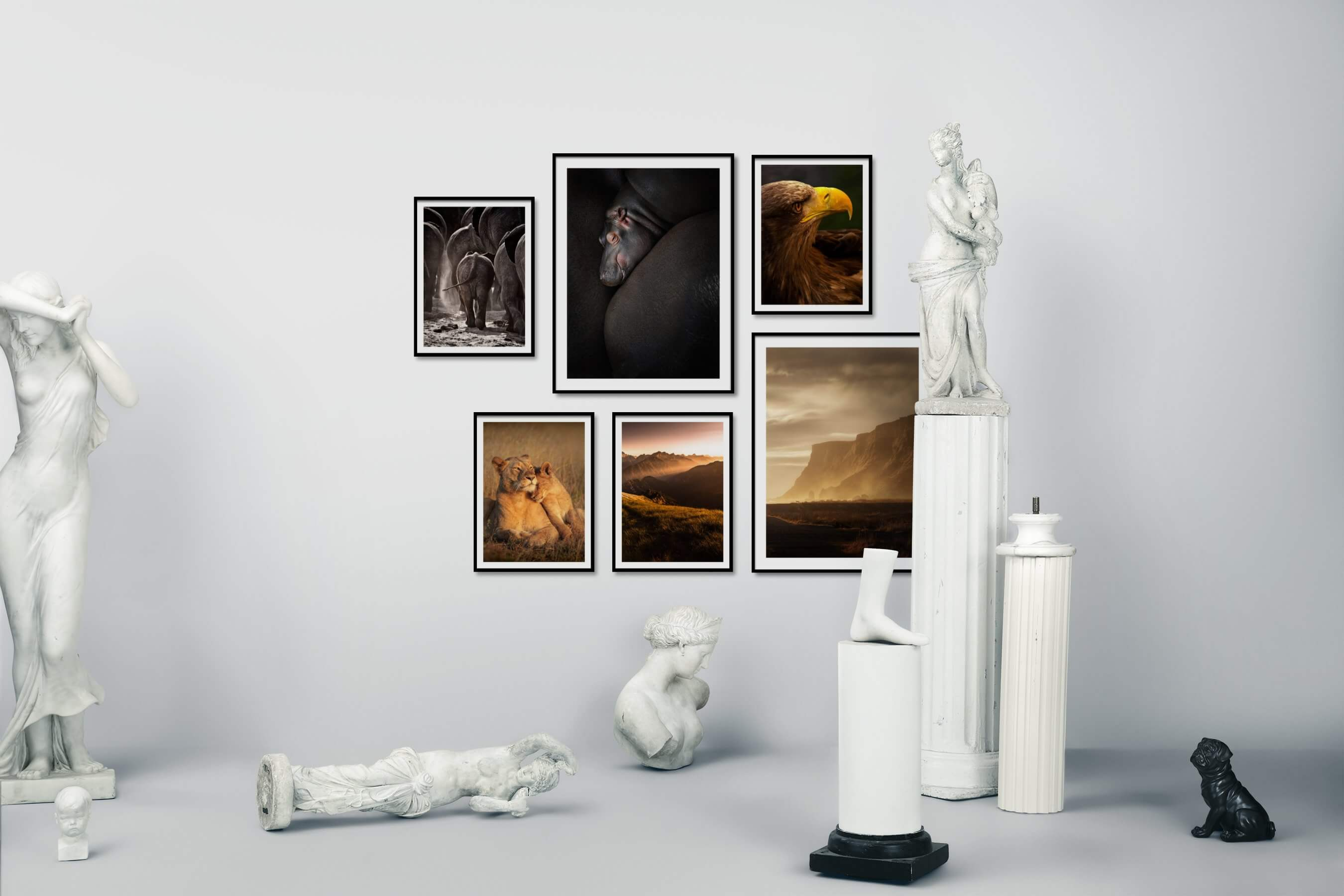 Gallery wall idea with six framed pictures arranged on a wall depicting Animals, For the Moderate, and Nature