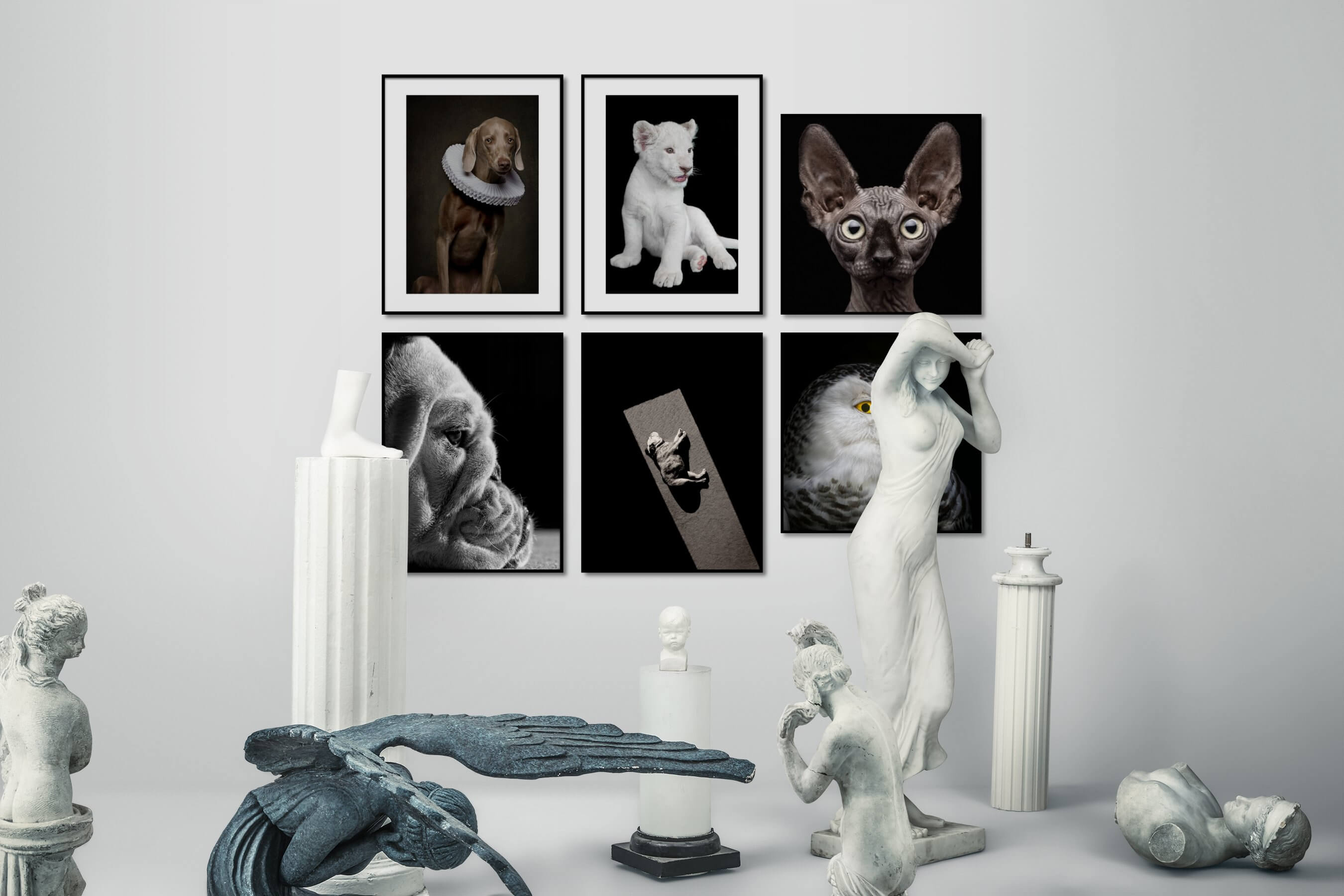 Gallery wall idea with six framed pictures arranged on a wall depicting Animals, Vintage, Black & White, Dark Tones, and For the Minimalist