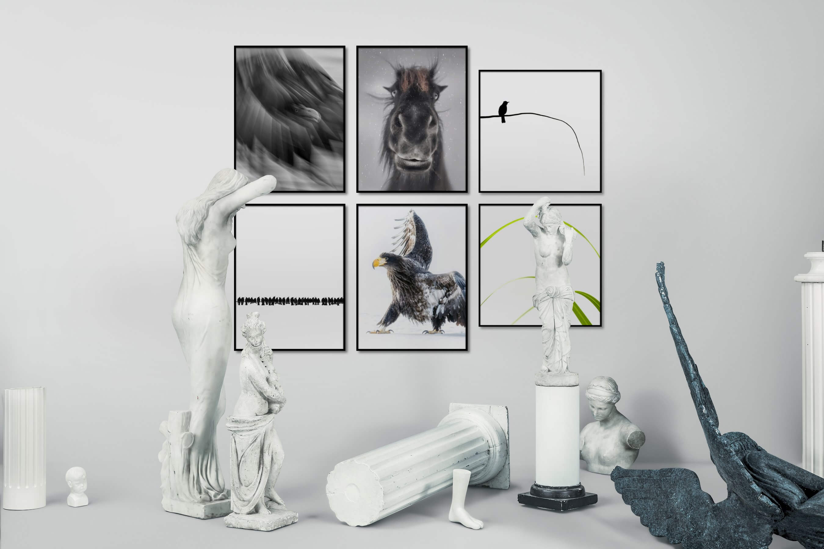 Gallery wall idea with six framed pictures arranged on a wall depicting Black & White, Animals, Bright Tones, For the Minimalist, Flowers & Plants, and Mindfulness